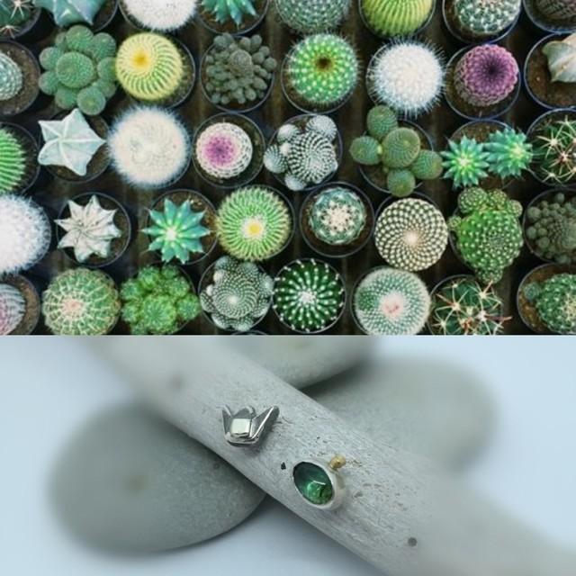 kaktuso žydėjimai